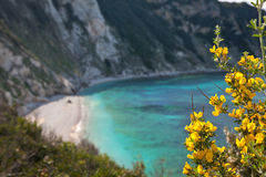Elba Island. Desert beach, flowers and cristal clear water Royalty Free Stock Images