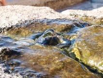 Elba Island, fontana Fotografia Stock