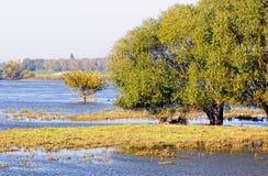 Elbe River landskap i saxony anhaltTyskland Viden och ?ngar arkivbild