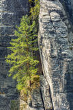 The Elbe Sandstone Mountains Stock Images