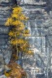 The Elbe Sandstone Mountains Stock Photo