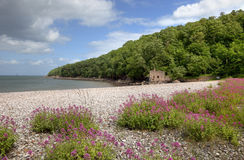 Elberry Cove, Devon Stock Photography