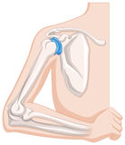 Elbow joint in human body royalty free illustration