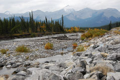 Elbow river valley in autumn Royalty Free Stock Images