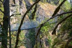 Elch fällt provinzieller Park Campbell River stockfotos