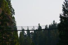 Elch fällt provinzieller Park Campbell River stockfotografie