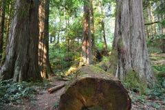 Elch fällt provinzieller Park Campbell River lizenzfreies stockfoto