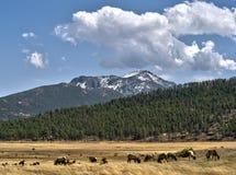 Elch-Herde und Rocky Mountain National Park Vista Lizenzfreies Stockfoto