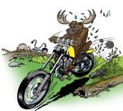 Elch-Radfahrer Stockfoto