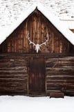 Elch-Schädel auf alter rustikaler Kabine Stockfotografie