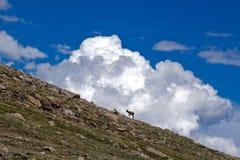 Elch-Schattenbilder auf Berghang gegen flaumige Wolken Lizenzfreies Stockbild