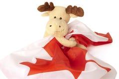 Elche, die eine kanadische Markierungsfahne anhalten Stockbild