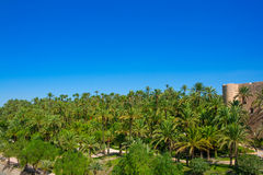 Elche Elx Alicante el Palmeral with many palm trees Royalty Free Stock Images