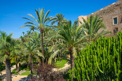 Elche Elx Alicante el Palmeral Palm trees Park and Altamira Pala Stock Image