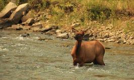 Elche - Flussüberquerung 02 Lizenzfreie Stockfotografie