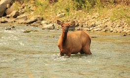 Elche - Flussüberquerung 03 Stockfoto