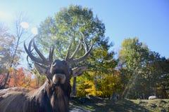 Elche im Wald lizenzfreie stockbilder