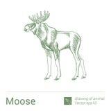 Elche, Zeichnen von Tieren, vectore Stockfotos