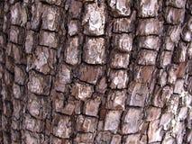 Elden Bark. What looks to be Alligator Juniper Stock Images