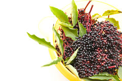 Elder Berries in a bowl Stock Images