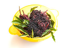 Elder Berries in a bowl Royalty Free Stock Photo