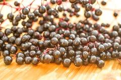 Elder berries Stock Photos