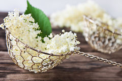 Elder flowers Royalty Free Stock Images