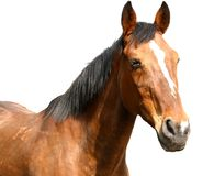 Elder horse. Enjoying the sunshine stock photography
