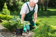 Elder man working in garden Royalty Free Stock Image