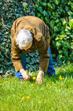 Elder person backyard garden care Royalty Free Stock Images