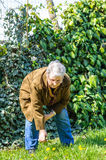 Elder person garden care spring Stock Photos
