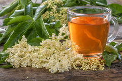 Elder  tea Stock Photography