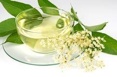 Elder tea and fresh elder blossom Stock Photos