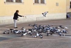 Elder woman feeding pigeons downtown palma de mallorca Royalty Free Stock Image
