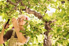 Elder woman gardening in her farm stock photos