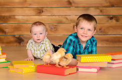 Elder and younger boys with books and chicks. Elder and younger little boys with colored books and alive chickens on floor on brown wooden wall background Stock Photos