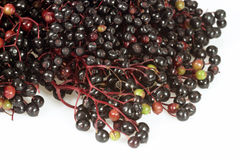 Elderberries Stock Photos