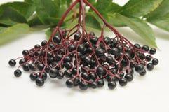 elderberries Στοκ εικόνα με δικαίωμα ελεύθερης χρήσης