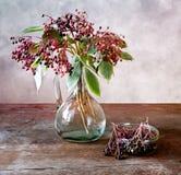 elderberries Стоковые Фото