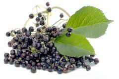 Elderberries_01 免版税库存照片