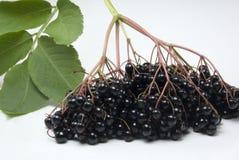 Elderberries Stock Images