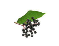 Elderberries with leaf Stock Image