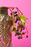 Elderberries. For a pink background Stock Image