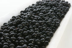 Elderberries on a styrofoam container Royalty Free Stock Image