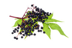 Elderberries Stock Image