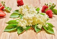 Elderberry άνθος στο καλοκαίρι στοκ φωτογραφία