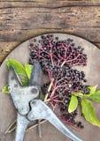 Elderberry και εκλεκτής ποιότητας κουρευτής ζώων στον ξύλινο πίνακα Στοκ Εικόνα