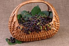 Elderberry στην ανασκόπηση γιούτας Στοκ εικόνες με δικαίωμα ελεύθερης χρήσης
