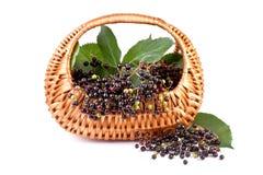 Elderberry στο καλάθι που απομονώνεται στο λευκό Στοκ Εικόνα