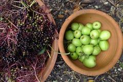 Elderberry и груша Стоковое Изображение RF
